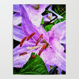 Lilies On Black Background Poster
