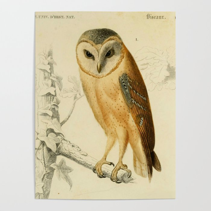 Night Owl Keepers curates Naturalist Barn Owl Poster by bluespecsstudio at Society 6