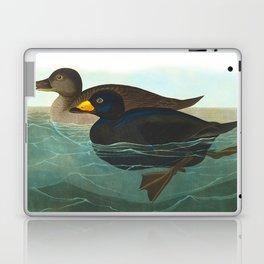 Scoter Duck Vintage Scientific Bird & Botanical Illustration Laptop & iPad Skin