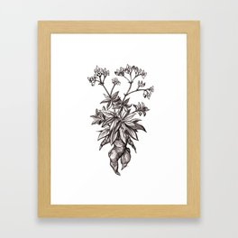 Mandragora Officinalis Framed Art Print