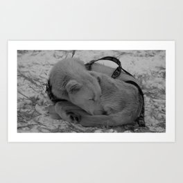Sleeping Snow Pup Art Print