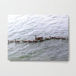 Gandering the Goslings Metal Print