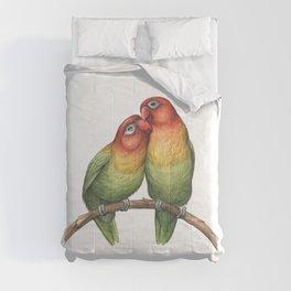 Fischer's Lovebird (Agapornis fischeri) Comforters