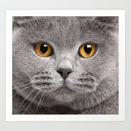 Cat in Grey Art Print