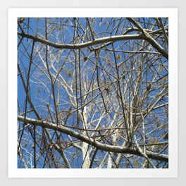 Crisp Cold Florida Morning Art Print