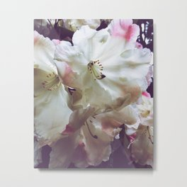 Rhododendrons Metal Print