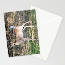 Fall Fawn Stationery Cards