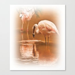 Painted Flamingoes Canvas Print