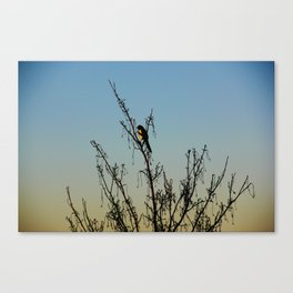 Evening song bird at sunset Canvas Print