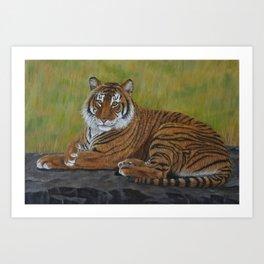 Tiger Laying Down Art Print