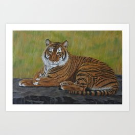 Tiger Laying Down Art Print