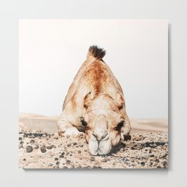 Camille the Camel Metal Print