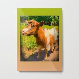 Nigerian Dwarf Goat Metal Print