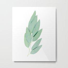 Eucalyptus globulus I Metal Print