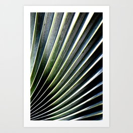 Winding Ridge Palm Tree Art Print