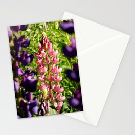 Lupins at Arrowtown Stationery Cards