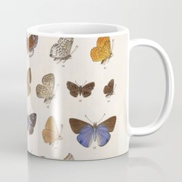 Vintage Scientific Insect Butterfly Moth Biological Hand Drawn Species Art Illustration Coffee Mug