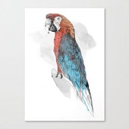 Cuban Macaw Canvas Print