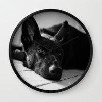 german shepherd Wall Clocks featuring Dog German Shepherd  by Jo Bekah Photography