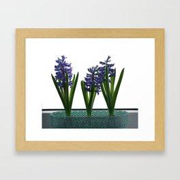 Hyacinths Framed Art Print
