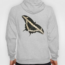 Butterfly Illustrated Print Hoody