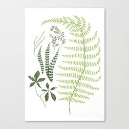 Botanical Collection 116 Canvas Print
