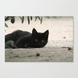Black Kitten Playing with Olives Canvas Print