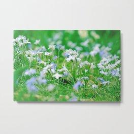 Wild Flower Photography  Metal Print