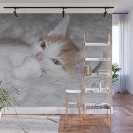 baby orange and white tabby kitten Wall Mural