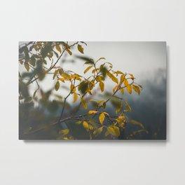 Nature photo - autumn leaves Metal Print