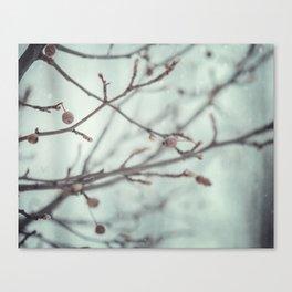 Wintermint. Canvas Print