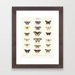 Vintage Butterfly Chart Framed Art Print