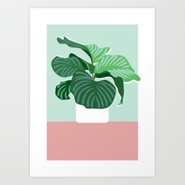 Big Fig Art Print