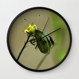Green Winged Fairy Butterfly Wall Clock