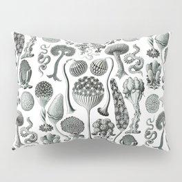 Ernst Haeckel - Mycetozoa Pillow Sham