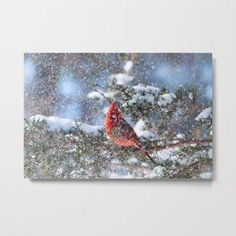 Let It Snow (Northern Cardinal) Metal Print