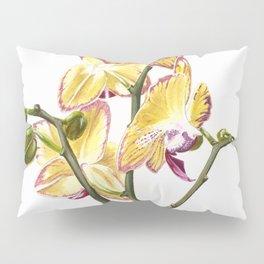 Yellow Phalaenopsis Orchid Traditional Artwork Pillow Sham