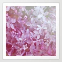 *Pinklight - Lilacs Art Print
