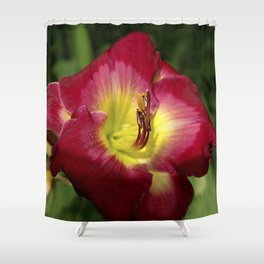 Rich red daylily Joan Derifield Shower Curtain