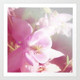 *Pinklight - Columbine Art Print