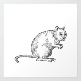 Quokka Drawing Black and White Art Print