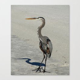 Living On A Beach Canvas Print