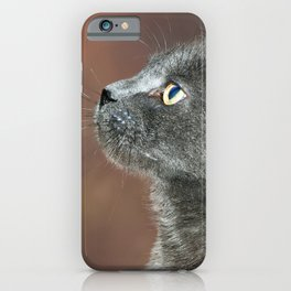 Whiskers on a Gray Cat iPhone Case