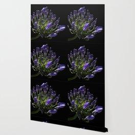Agapanthus on Black Wallpaper