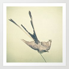 Bird Study #1 Art Print