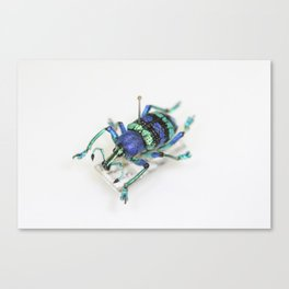Wonderful weevils_01 Canvas Print
