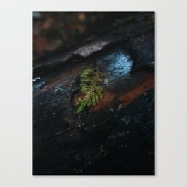 A Day After Autumn Rain Canvas Print