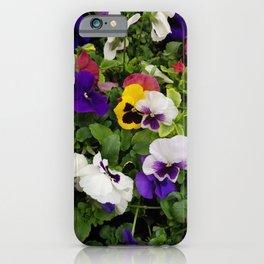Pansies, Flowers, Bouquet iPhone Case