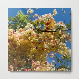 Wilhelmina Tenney Rainbow Shower Tree Maui Hawaii Metal Print