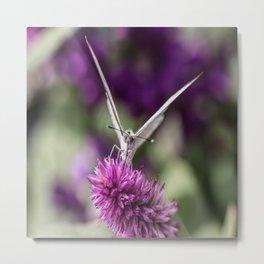 Southern White Butterfly Metal Print